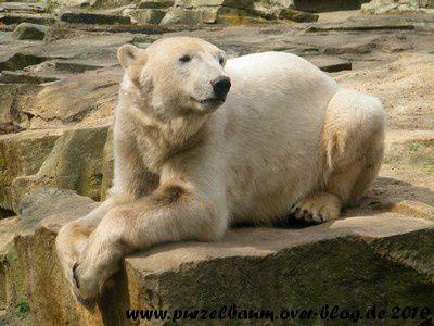 Knut am 2. Mai 2010