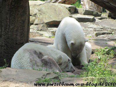 Knut und Gianna am 9. Juni 2010