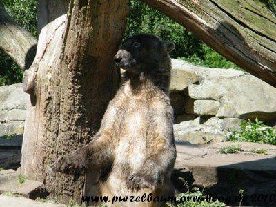 Knut am 27. Juni 2010