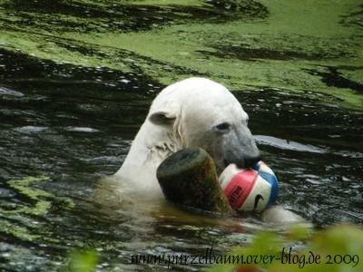 Knut am 1. Juli 2009