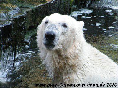 Knut am 3. Juli 2010