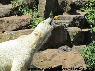Knut am 9. Juli 2010