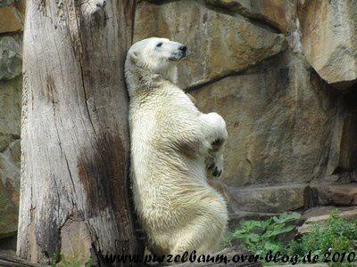 Knut am 6. August 2010