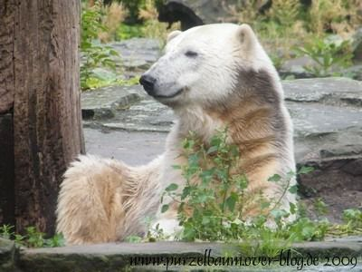 Knut am 3. September 2009
