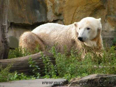 Knut am 2. Oktober 2009
