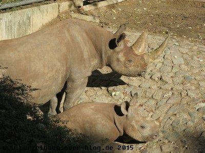Nashornmama mit Söhnchen
