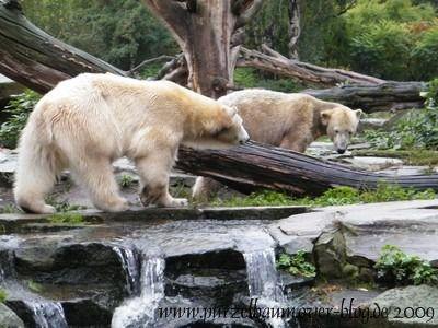 Knut und Gianna am 11. Oktober 2009