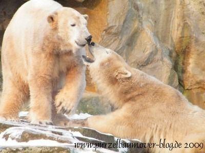 Knut und Gianna am 19. Dezember 2009