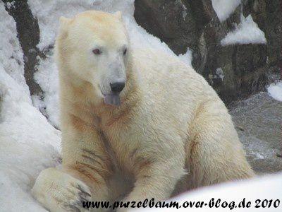 Knut am 29. Dezember 2010