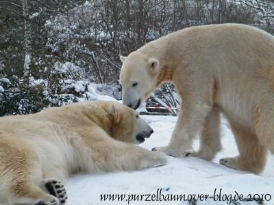Knut und Gianna am 3. Januar 2010