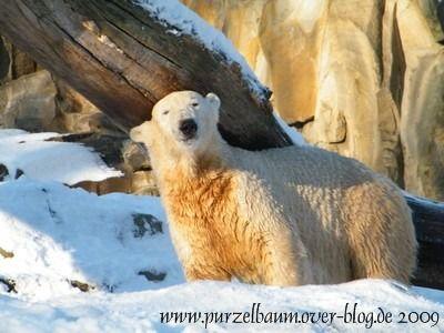 Knut am 6. Januar 2009