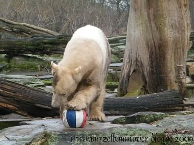 Knut am 25. Januar 2009