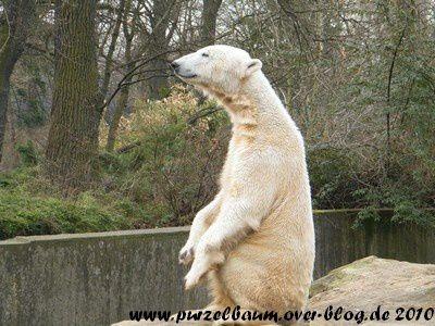 Knut am 24. März 2010