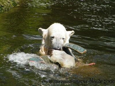 Knut am 1. Juni 2009