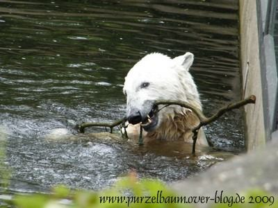 Knut am 20. Juni 2009