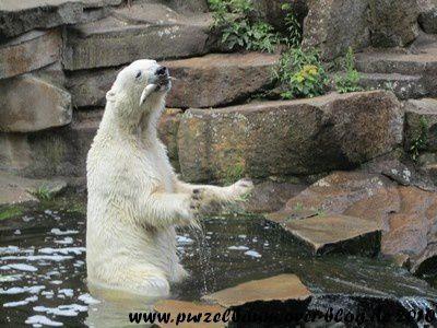 Knut am 7. Juli 2010