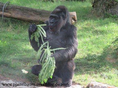 Fatou beim Frühstück