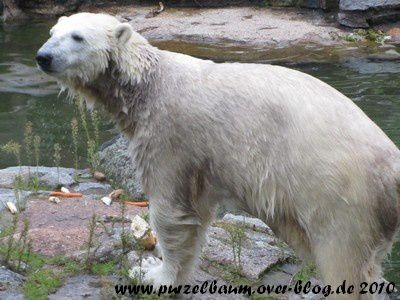 Knut am 9. September 2010