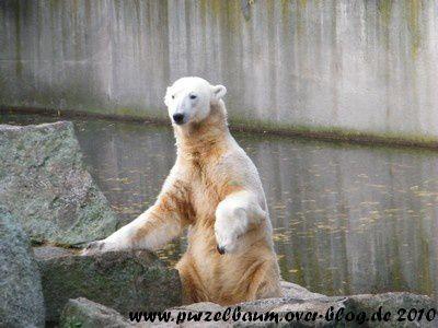 Knut am 7. November 2010