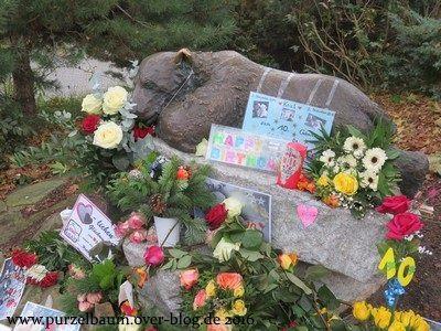 Rund um die Knut-Statue