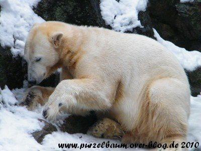 Knut am 11. Dezember 2010