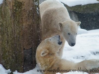 Knut und Gianna am 2. Januar 2010