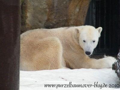 Knut am 20. Januar 2010