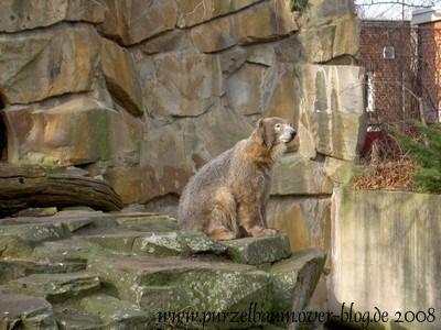 Knut am 11. Februar 2008