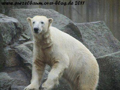 Knut am 14. März 2011
