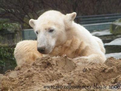Knut am 15. März 2009