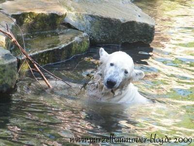 Knut am 2. Mai 2009