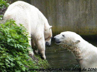 Knut und Gianna am 13. Mai 2010