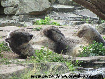 Knut am 23. Juni 2010