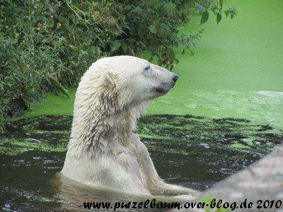 Knut am 3. August 2010