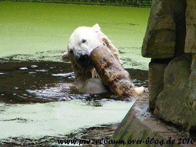 Knut am 7. August 2010