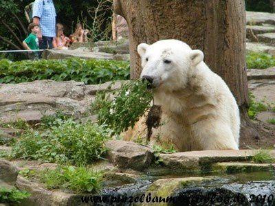 Knut am 11. August 2010