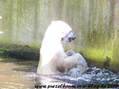 Knut am 21. August 2010
