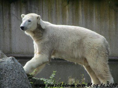Knut am 16. September 2010