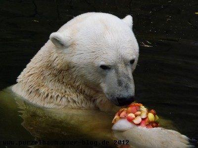 Lars im Zoo Rostock