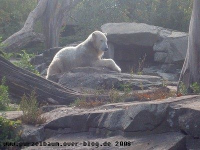 Knut am 26. September 2008