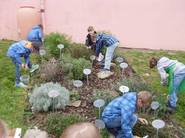 Dahlheimer Schulkinder pflegen Kräuterbeet am Roten Platz