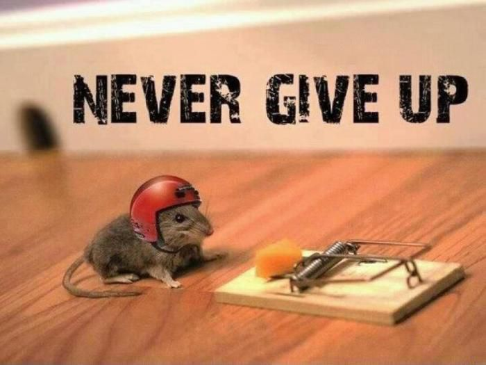 weiter ab 4.5 bis 30.5 Never Give up !