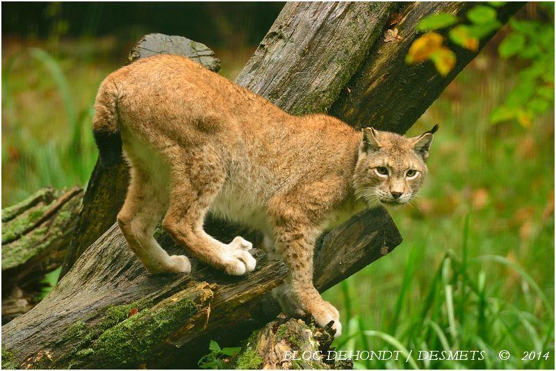 Les animaux protégés en France