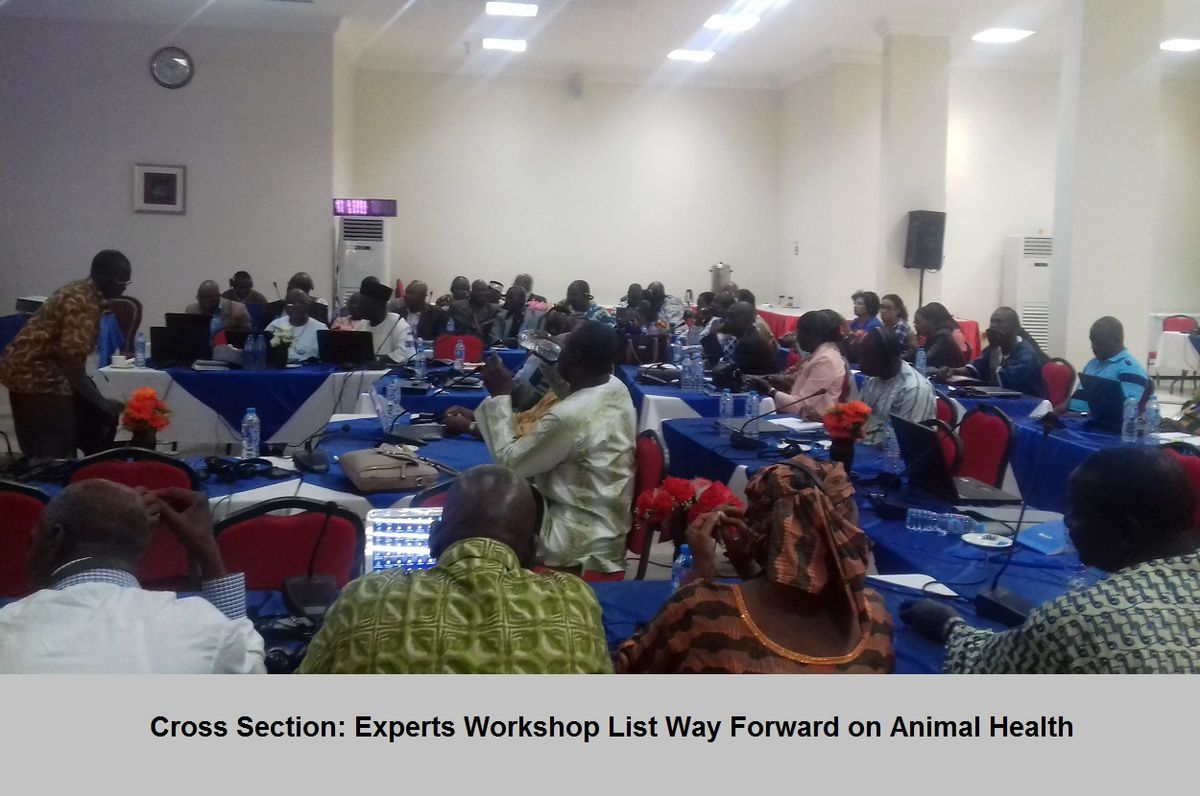 Experts List Way Forward on Animal Health