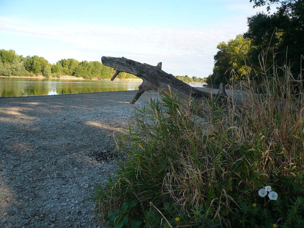 La Loire un matin de juillet à Fourchambault
