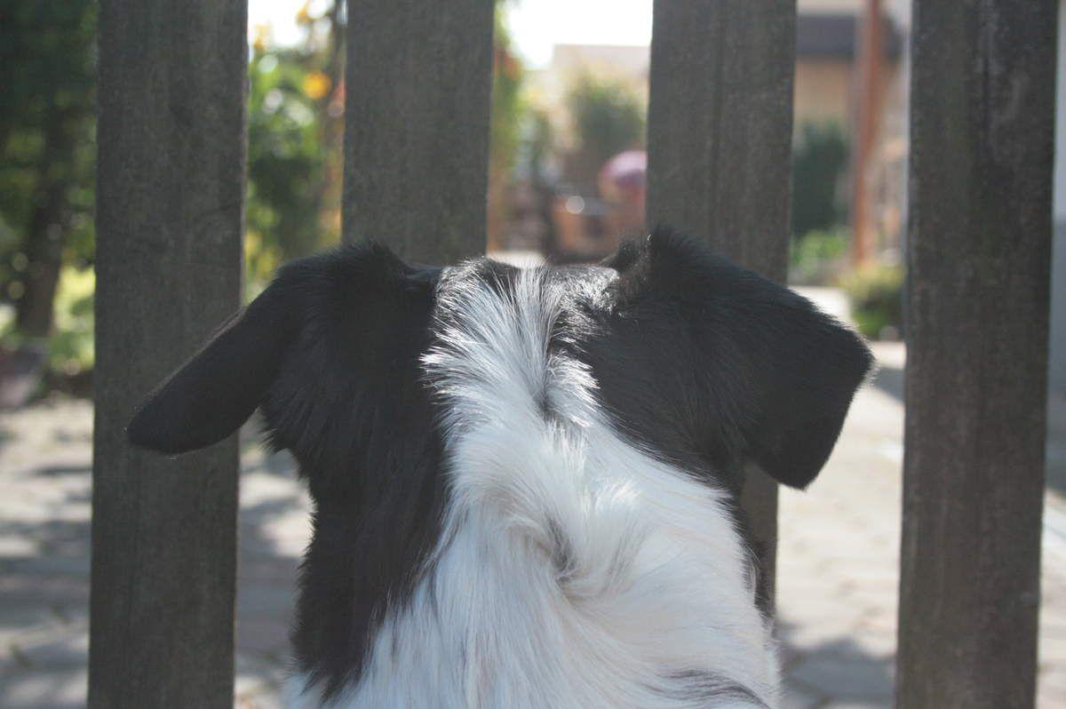 Im Freistaat sind selbst die Hunde genormt.