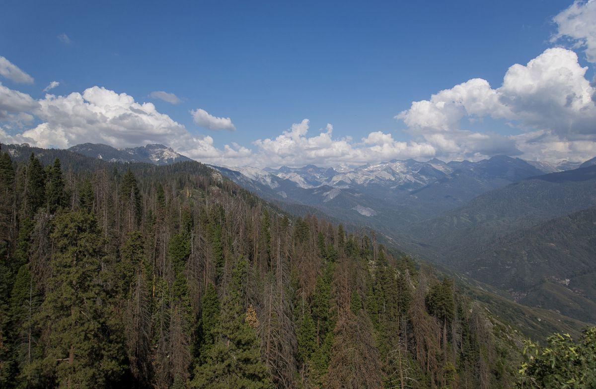 Sequoia National Park - Road Trip 1