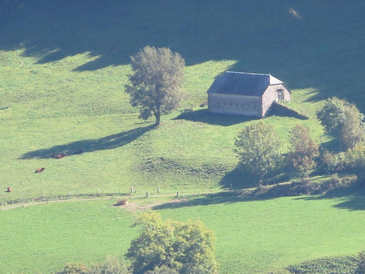 Salers c'est aussi une race de vaches rousses et dodues, avec des cornes en forme de lyre et elles sont partout au milieu de ces vertes vallées où les bottes de foin font comme des bonbons étalés sur un plateau