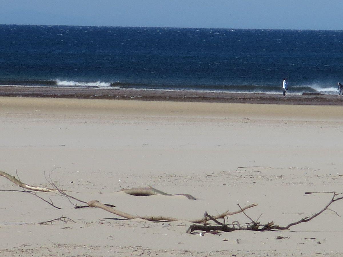 Moliets: la plus grande plage de la côte landaise, où vient se jeter le Courant d'Huchet,