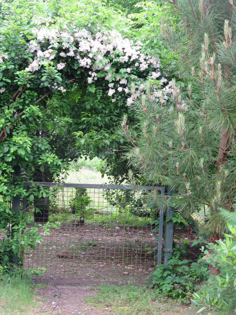 La cabane fin mai... la jardinière est venue mettre de l'ordre et le massif rocailleux est vraiment en beauté et le portillon de la basse cour invite à aller plus loin